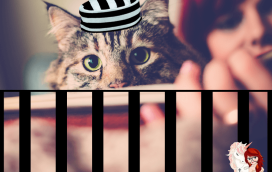 CAT FENCING – OUR MEOW-CATRAZ