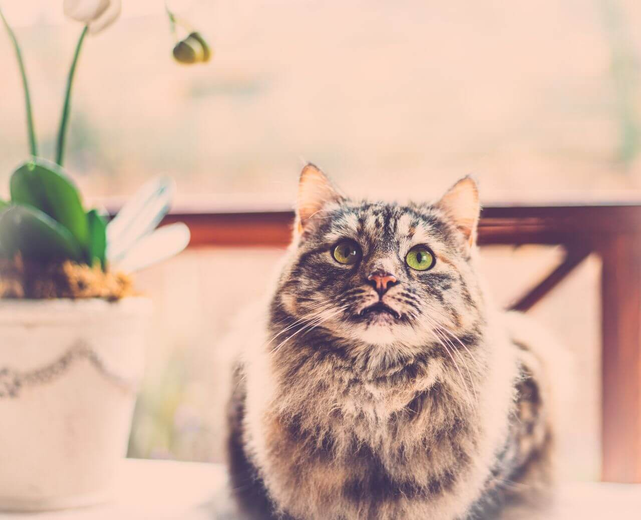 15+ Foods Toxic To Your Cat