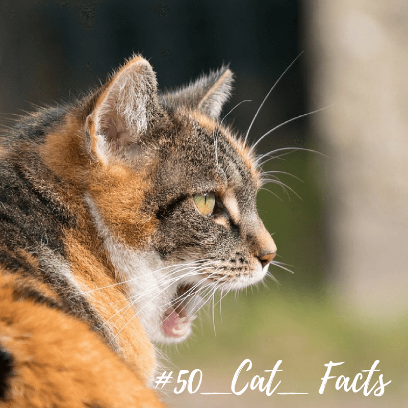 Cat taste air