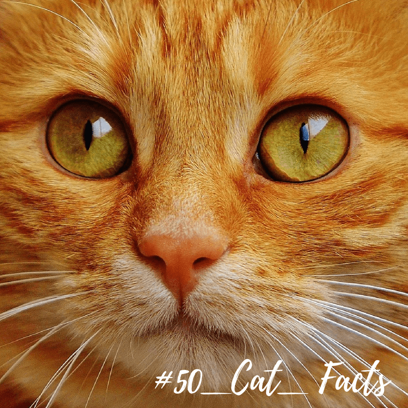 50 jaw dropping cat facts sparkle ellie