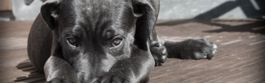 What To Do When Your Pet Goes Missing