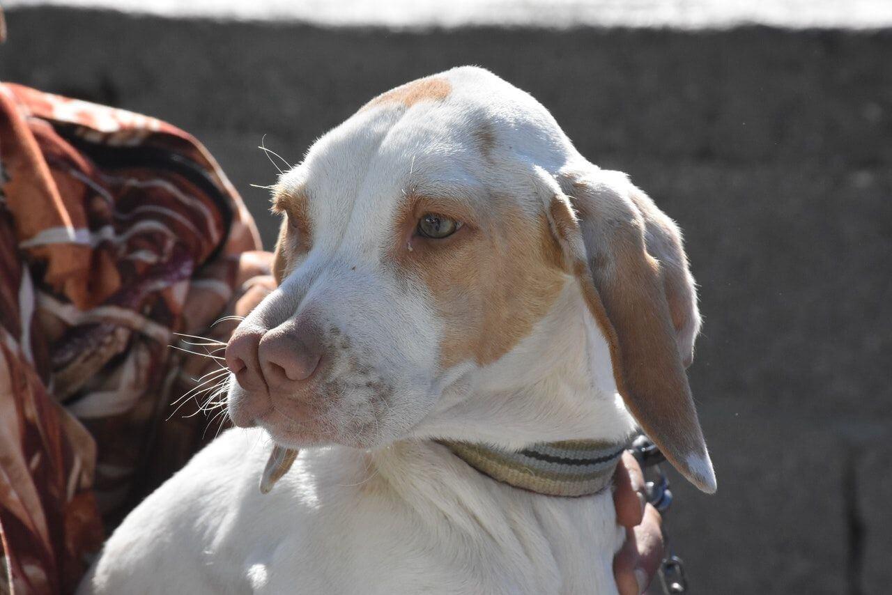 20 Strangest Dog Breeds of the World