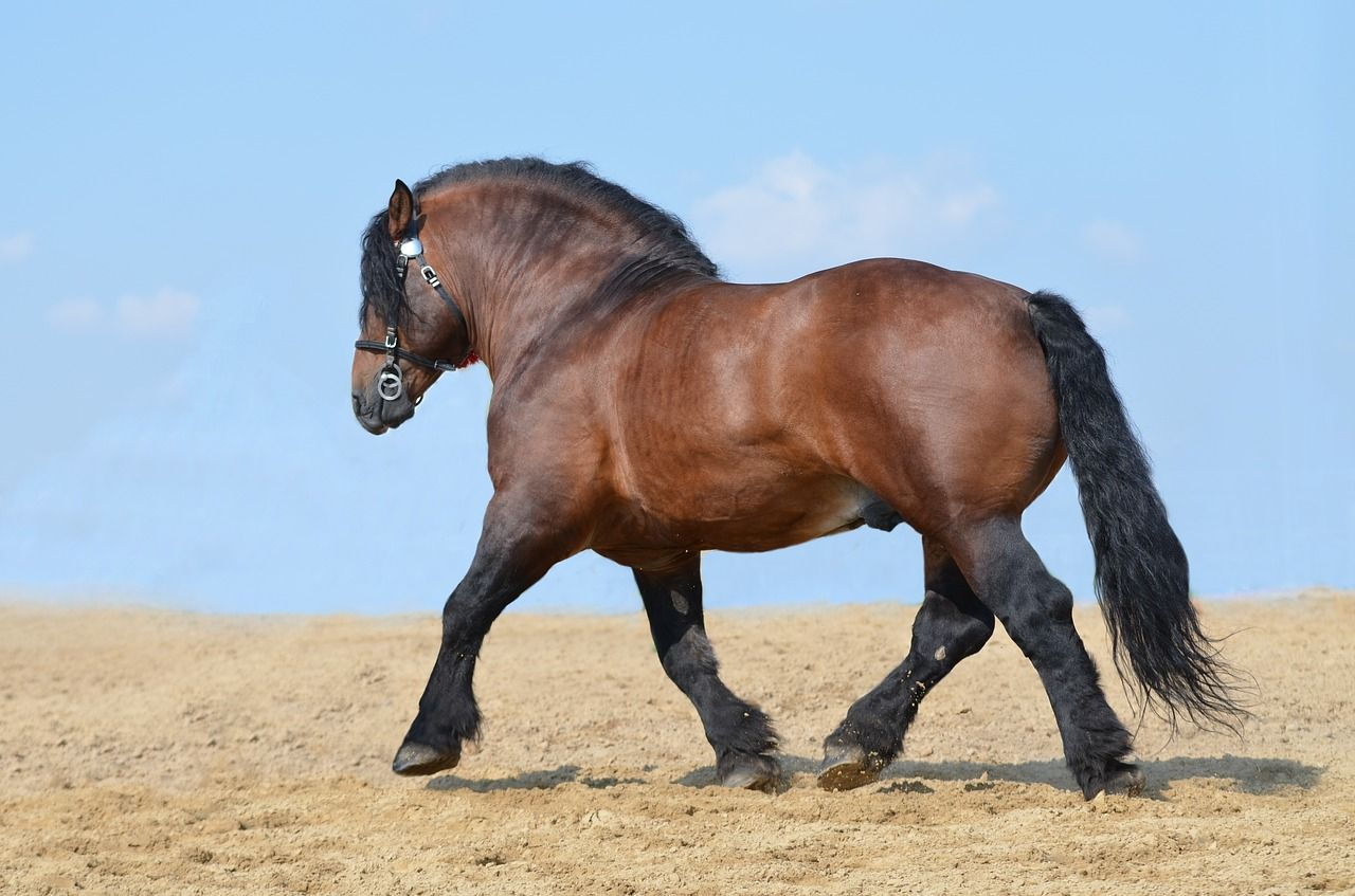5 Biggest Horse Breeds of the World