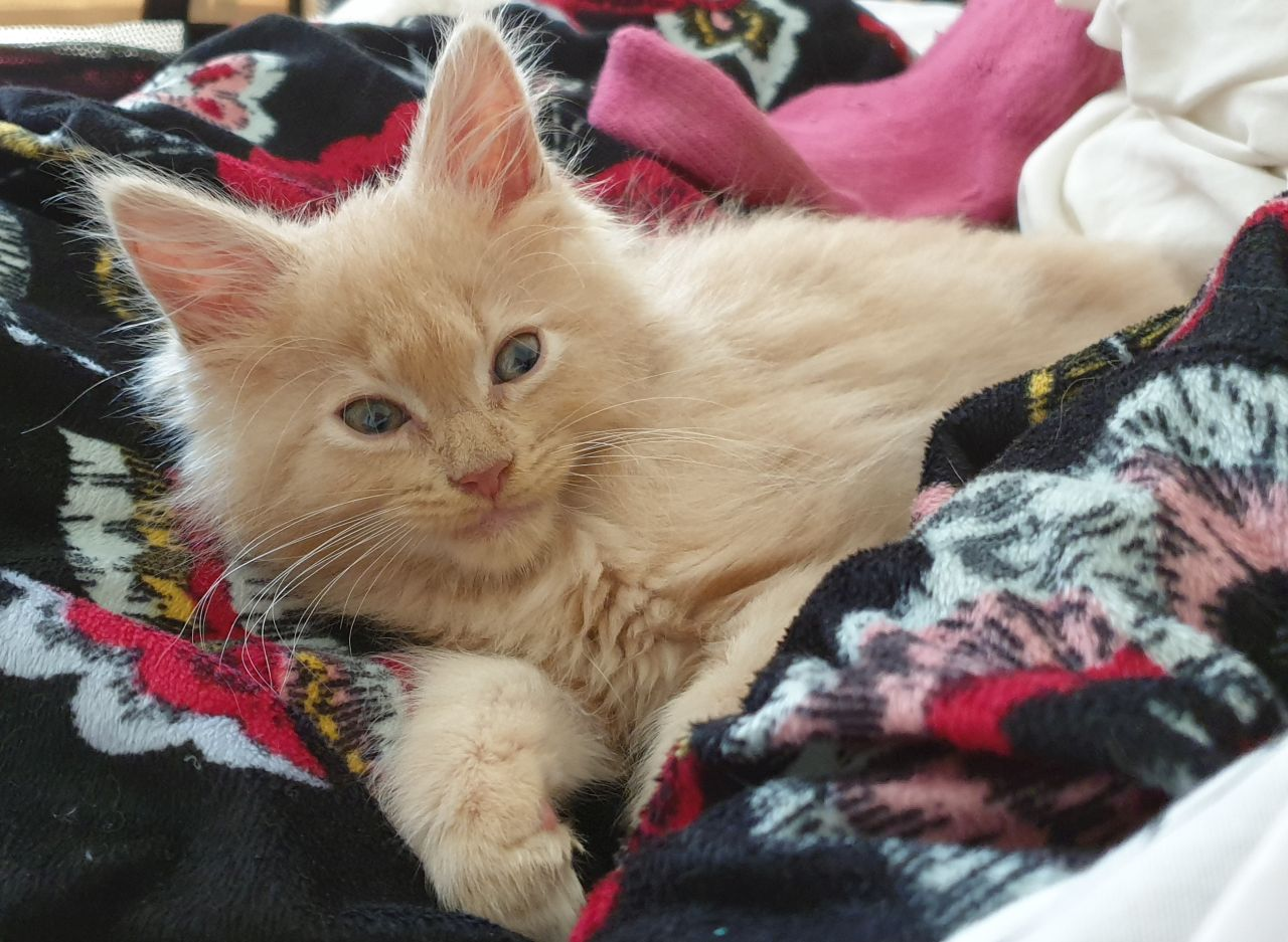 Our Journey with our Megaoesophagus Kitten